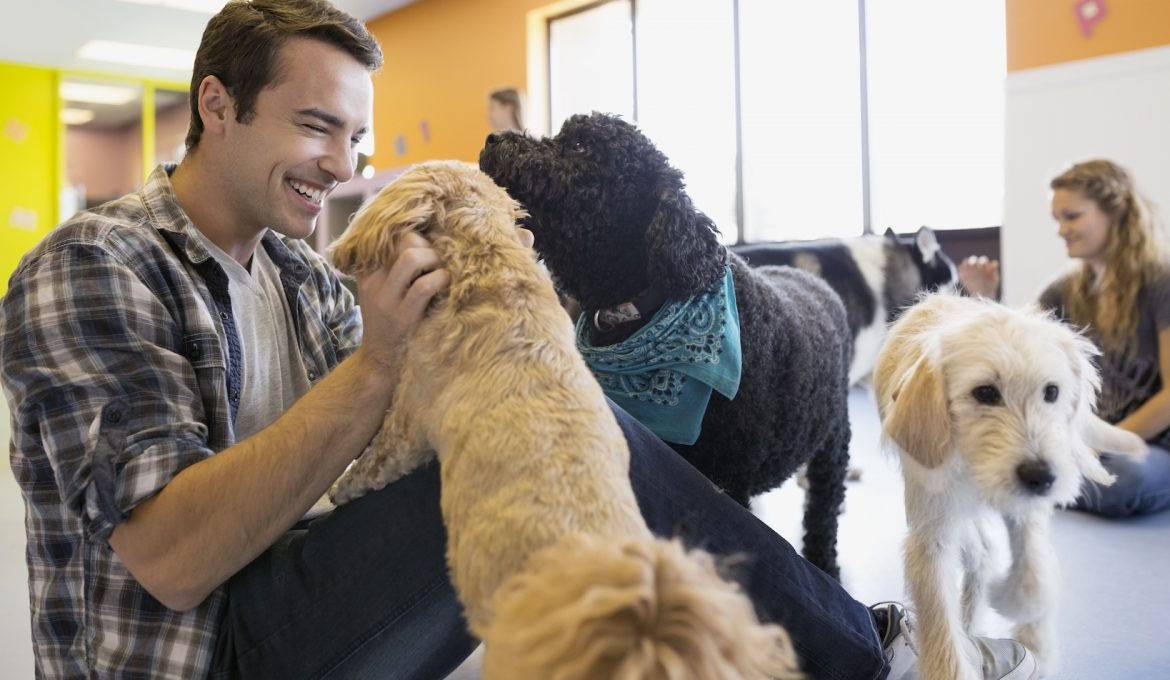 Finding the Best Doggie Daycare